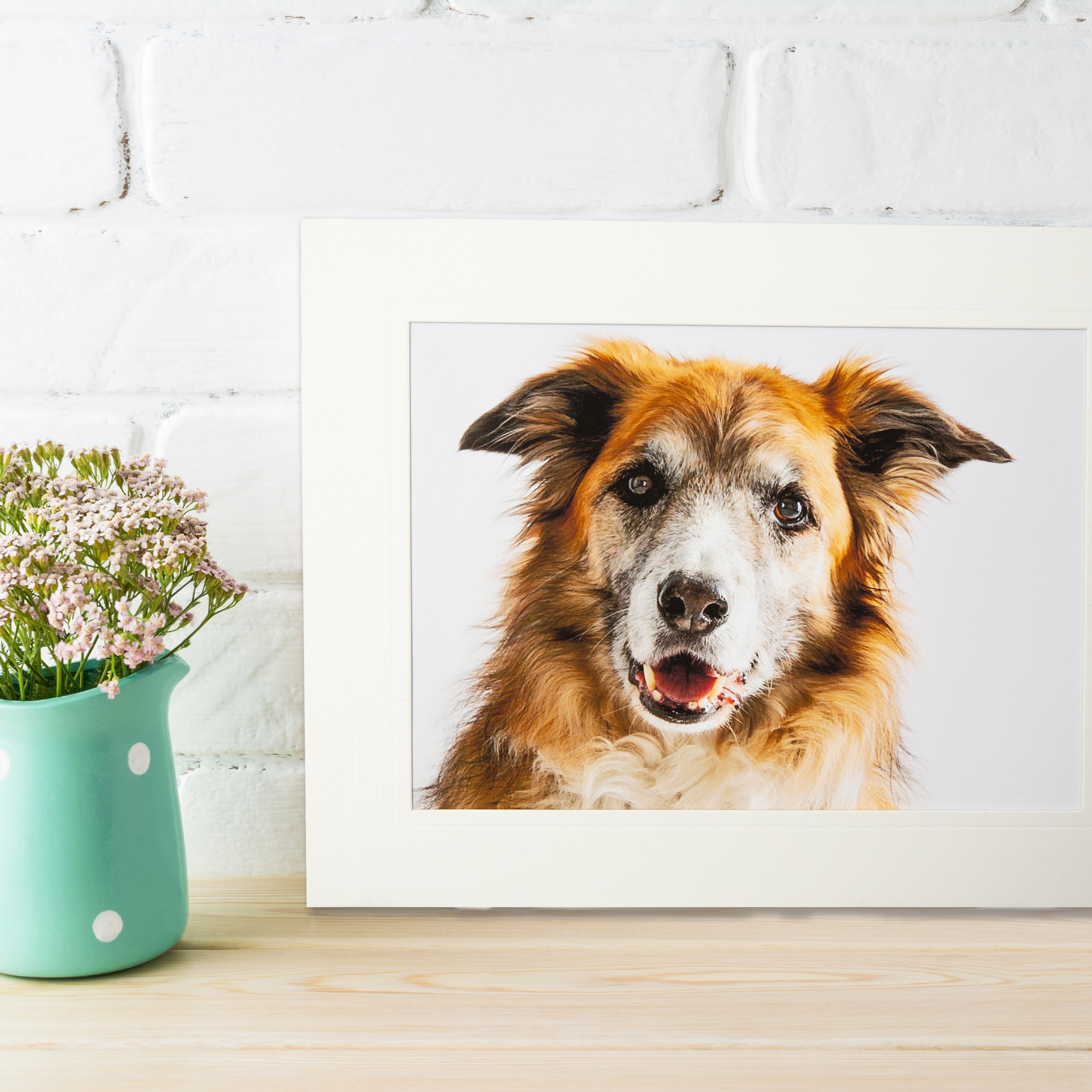 fine art photographic print of dogs offley photography