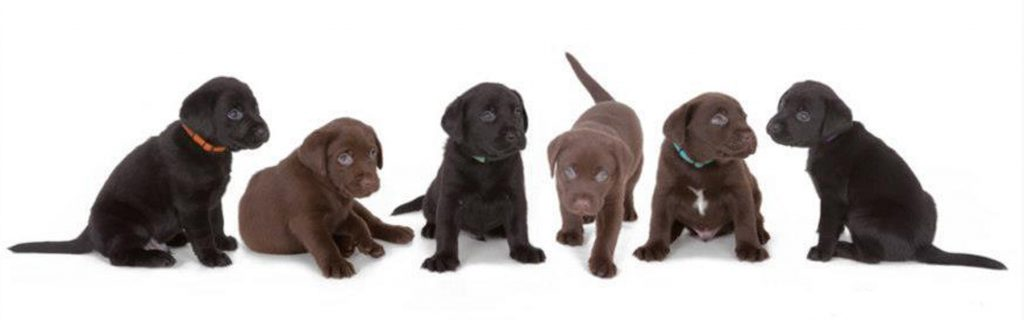 image showing puppy dogs during their pet portrait session offley photography wirral