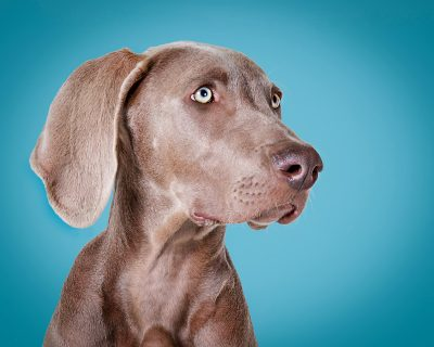 studio pet photography wirral